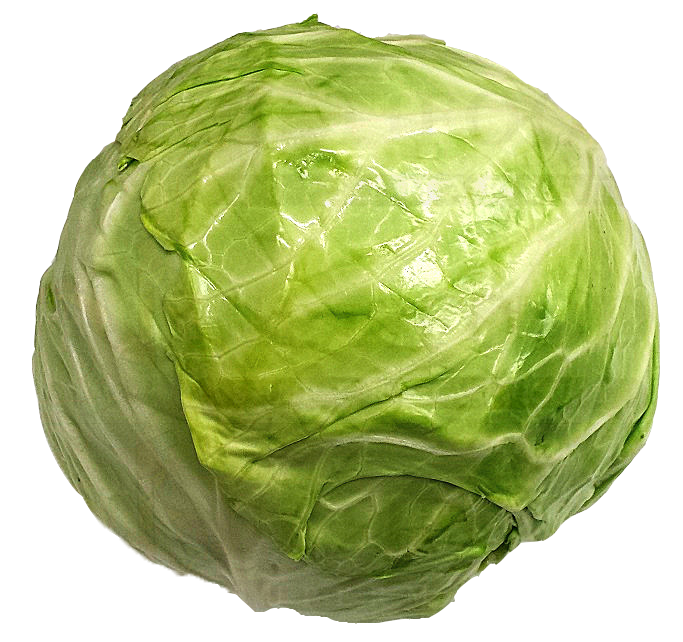 GREEN CABBAGE  EA