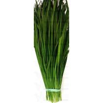 GREEN CHIVE 韭菜 1LB