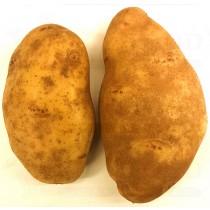 BLACK POTATO 灰马铃薯 1LB