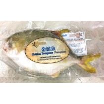 GOLDEN POMPANO 金鲳鱼33LB