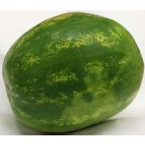 SEEDLESS WATERMELON 無籽西瓜 1EA