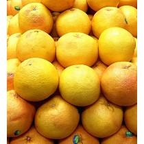 JAFFA RED GRAPEFRUIT 以色列紅肉柚子 1EA
