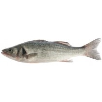 STRIPED BASS 鲈鱼 1LB