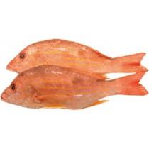 RED SNAPPER 红鸡鱼 1LB